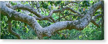 Detail Of Sycamore Tree In A Forest Canvas Print by Panoramic Images