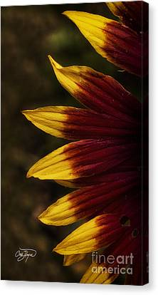 Details Of Spring Canvas Print by Cris Hayes