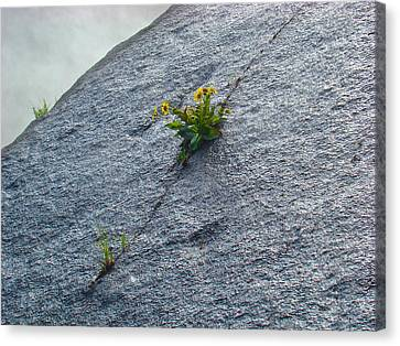 Canvas Print featuring the photograph Determination by Paul Foutz