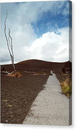 Canvas Print featuring the photograph Devastation Trail by Mary Bedy