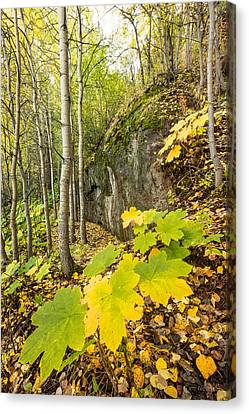 Canvas Print featuring the photograph Devil's Club In Autumn by Tim Newton