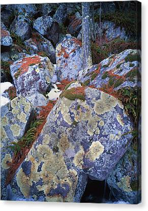 Devil's Lake Boulders Canvas Print by Ray Mathis