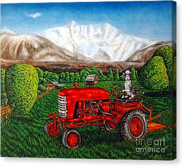 Devon Rex Cat On The Farm Canvas Print by Jay  Schmetz