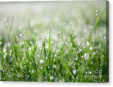 Canvas Print featuring the photograph Dew Drenched Morning by Jan Bickerton