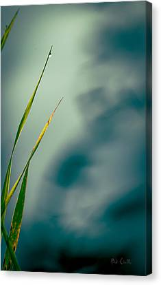 Dew Drop Canvas Print by Bob Orsillo