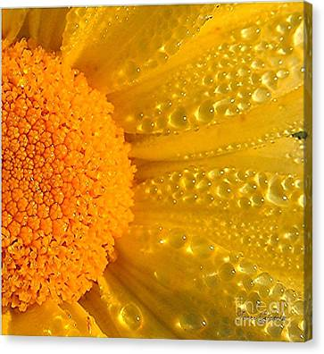 Canvas Print featuring the photograph Dew Drops On Daisy by Terri Gostola