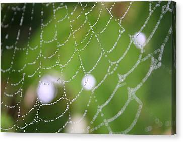 Dew On A Web  Canvas Print
