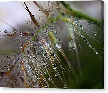 Canvas Print featuring the photograph Dew On Fountain Grass by Joe Schofield