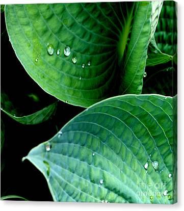 Dew Canvas Print by Valerie Fuqua