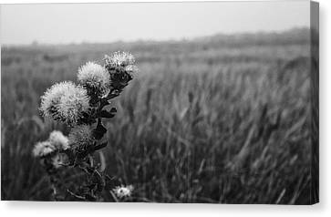 Canvas Print featuring the photograph Dew by Yvonne Emerson AKA RavenSoul