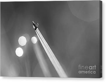 Dewdrop On Blade Of Grass With Sparkle - Black And White Canvas Print by Natalie Kinnear