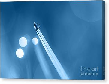 Dewdrop On Blade Of Grass With Sparkle In Blue Canvas Print by Natalie Kinnear
