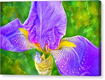 Canvas Print featuring the photograph Dewey Iris by Adria Trail