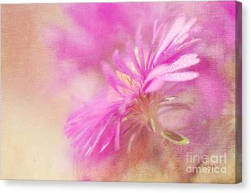 Aster Canvas Print - Dewy Pink Asters by Lois Bryan