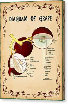 Diagram Of Grape Canvas Print by Indian Summer
