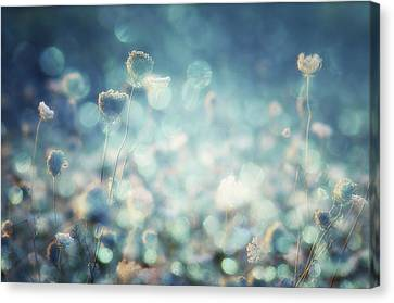 Diamonds Canvas Print by Stefan Eisele