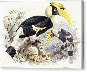 Dichocerus Bicornis Canvas Print by Johan Gerard Keulemans