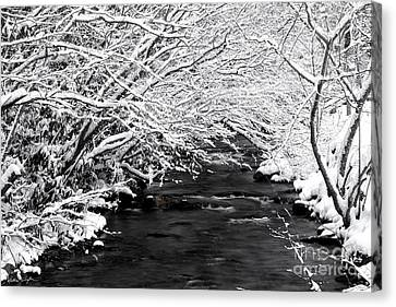 Dick's Creek Snow 2014 Canvas Print