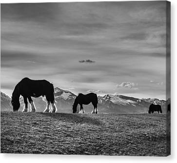 Dick's Horses Canvas Print by Dianne Arrigoni