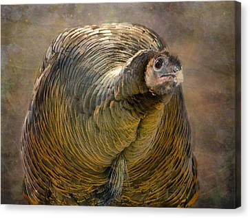 Did I Miss Thanksgiving?  Canvas Print by Betty  Pauwels