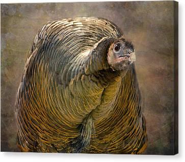 Did I Miss Thanksgiving?  Canvas Print