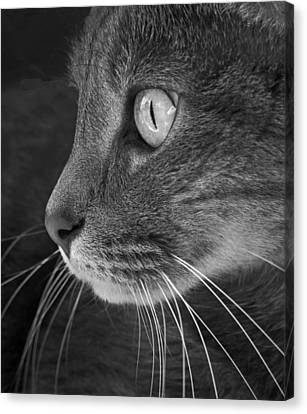 Did Someone Say Mouse Canvas Print by Don Spenner