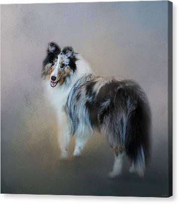 Did You Call Me - Blue Merle Shetland Sheepdog Canvas Print by Jai Johnson