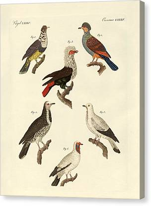 Different Kinds Of Foreign Pigeons Canvas Print by Splendid Art Prints