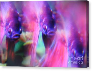 Digital Abstract With Fish 6 Canvas Print