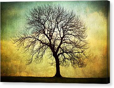 Digital Art Tree Silhouette Canvas Print