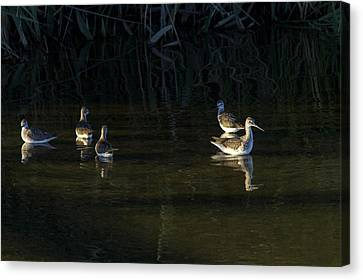Digital Oil Of Sandpipers Canvas Print