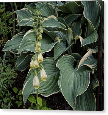 Canvas Print featuring the photograph Digitalis by Leif Sohlman