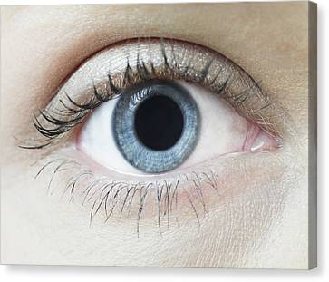 Dilated Pupil Canvas Print by Science Photo Library