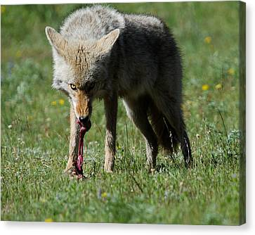 Dinner Canvas Print by Gary Wightman