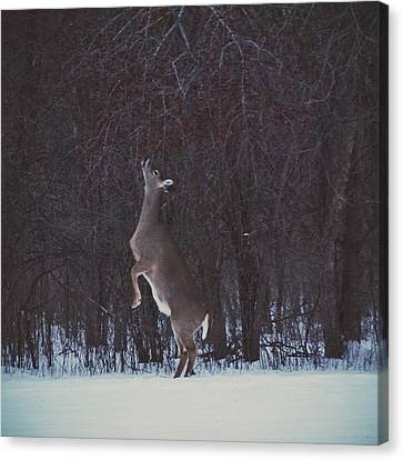 Dinner Hunt Canvas Print