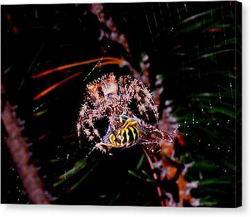 Dinner Canvas Print by Joe Hamilton