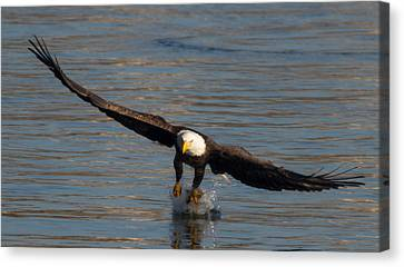 Dinner On The Wing  Canvas Print by Glenn Lawrence