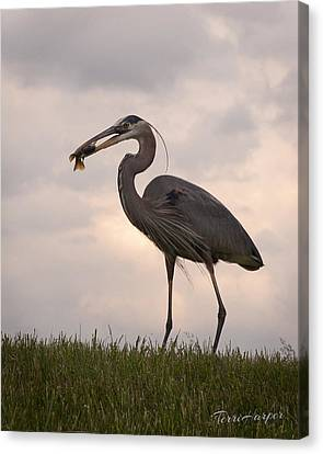 Dinner Time Canvas Print by Terri Harper