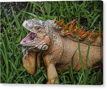 Canvas Print featuring the photograph Dinosaur by Phil Abrams