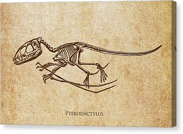 Dinosaur Pterodactylus Canvas Print by Aged Pixel
