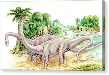 Diplodocus Dinosaurs Canvas Print