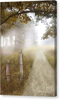 Dirt Road In Fog Canvas Print by Jill Battaglia