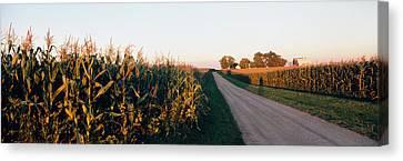 Dirt Road Passing Through Fields Canvas Print