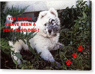 Dirty Dog Christmas Card Canvas Print