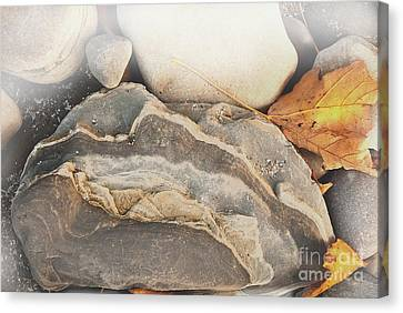 Canvas Print featuring the photograph Discovered Beauty by Lena Wilhite