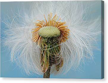 Disheveled Canvas Print by Frozen in Time Fine Art Photography