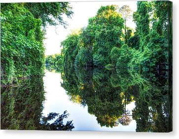 Dismal Swamp Canal Canvas Print by David Cote