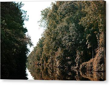 Dismal Swamp Canal Canvas Print by Rebecca Davis