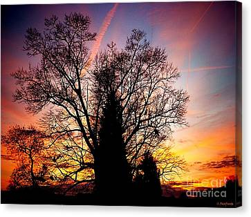 Display Of Beauty Canvas Print