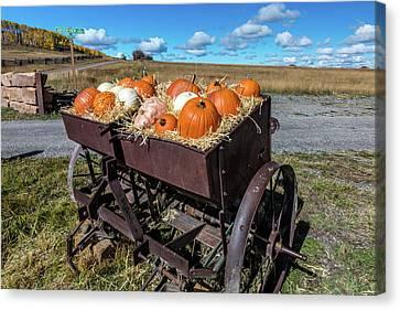 Display Of Halloween Pumpkins, Hastings Canvas Print